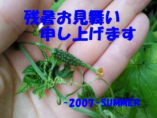 2007zansho.JPG