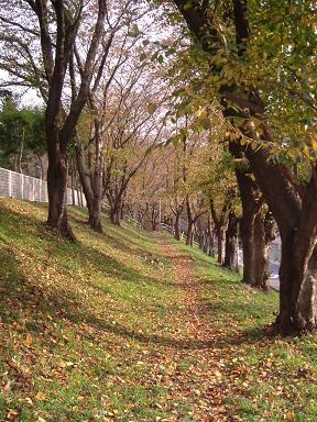 autumn2005.JPG