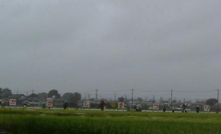 kakashimatsuri.JPG